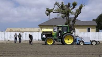 Los robots cosechadores permiten una recolecta más delicada.