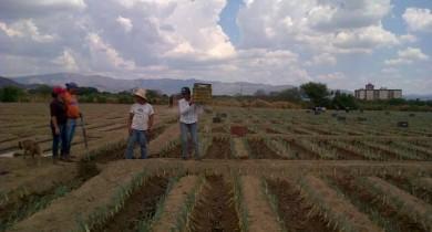 subsidios-produtos-agricolas