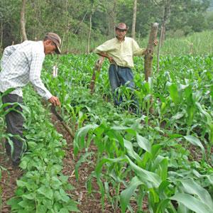 productores-agrícolas-subsidio
