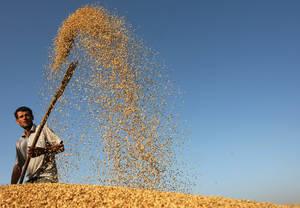 fao-produccion-cereales
