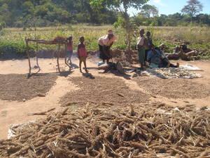 Recolección de cereales en África meridional, donde los precios han alcanzado niveles récord