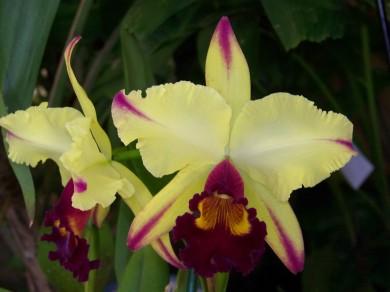 Orquideas-exposicion-bod