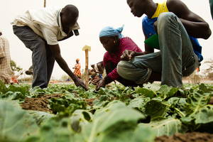 slow food-nutricion-fao-africa