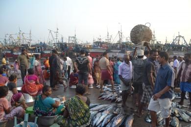 pesca ilegal-india